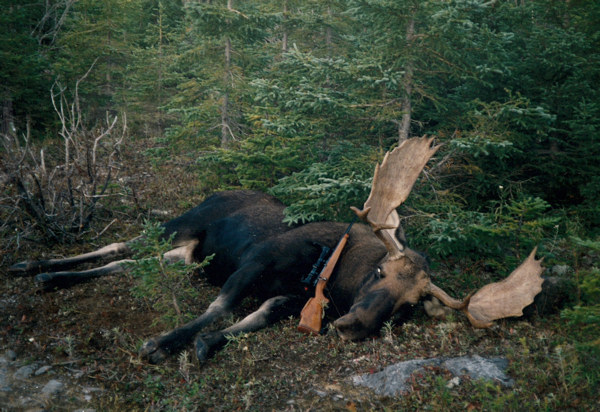 B Moose Hunting All moose hunts are